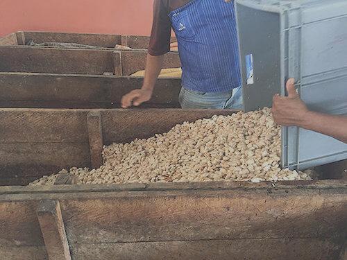 Herstellung Rohkakao aus Ecuador - HeartSolution Zeremonieller Rohkakao